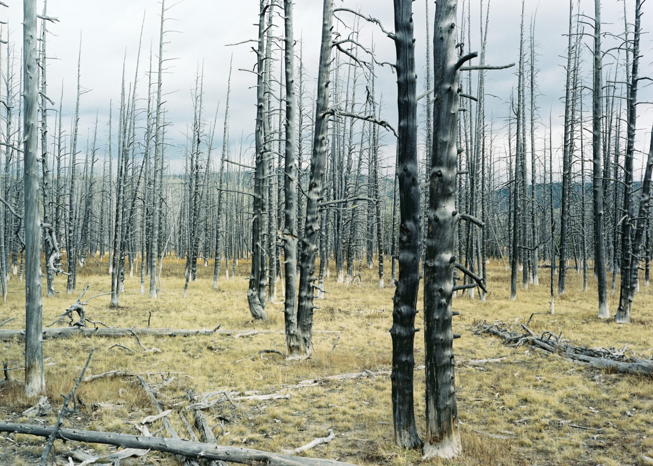 Forest Fire Yellowstone National Park Wyoming by Catherine Lemble