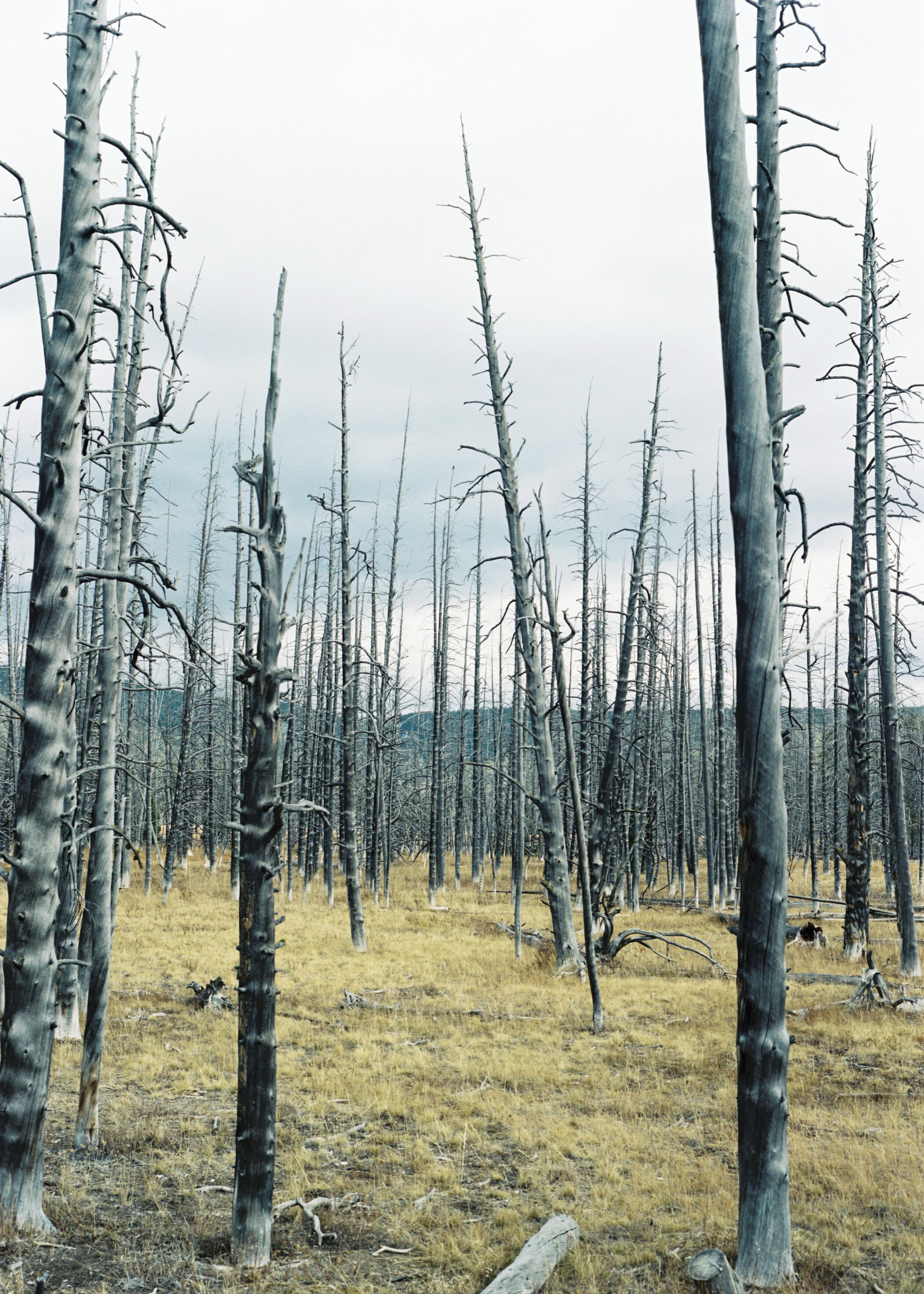 West Forest Fire Yellowstone National Park Wyoming by Catherine Lemble
